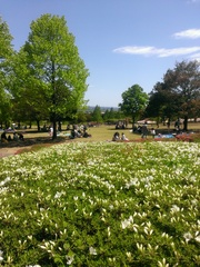 GW公園.jpg