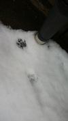 足跡.jpgのサムネイル画像